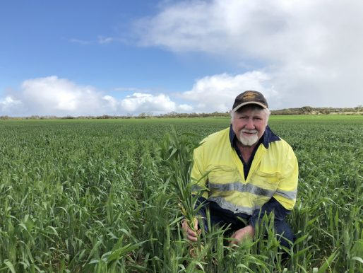 New Havoc wheat jumps from trial to 50pc of program at Carnamah