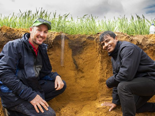 Combining lime and gypsum boosts crop yield potential