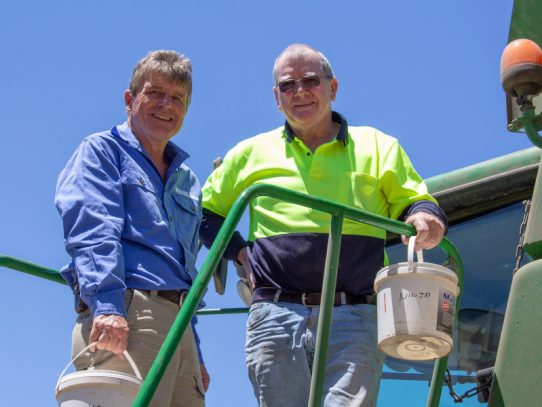 Mingenew grower adopts new wheat variety Havoc after trial