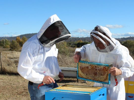 Beekeeper survey reveals pest and disease threats to honey bees