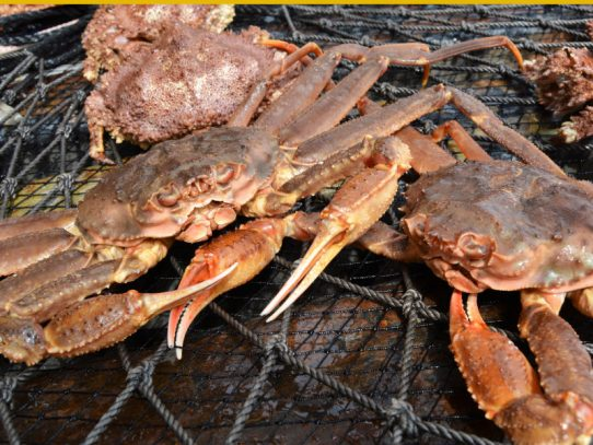 Science plays a vital role in sustainable seafood