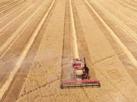 UQ licenses Mexican wheat variety to bolster Australian market