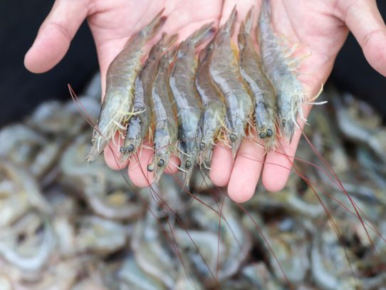 $7 million to boost growth of the Mid-West aquaculture industry