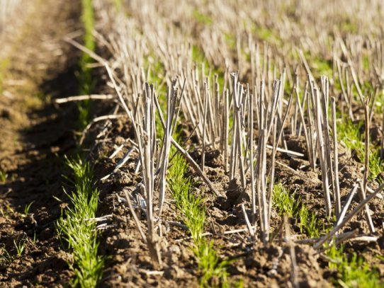 Optimising HRZ crop yields aim of workshops