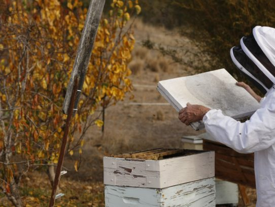 Free biosecurity course for Aussie beekeepers