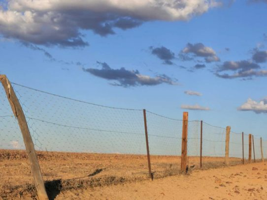 $1M extra boost for WA wild dog fence project