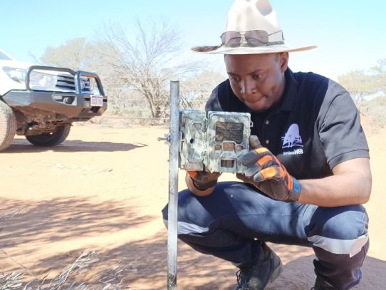 Monitoring wild dog and wildlife interactions in WA cluster fencing cells