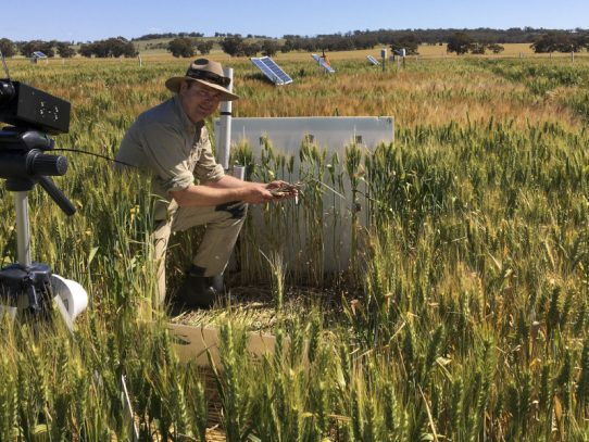 Research gives insight into how stubble influences frost risk