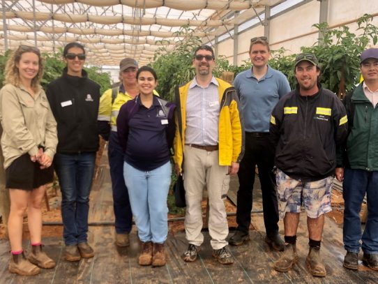 Sub-tropical horticulture research blooms at DPIRD field day