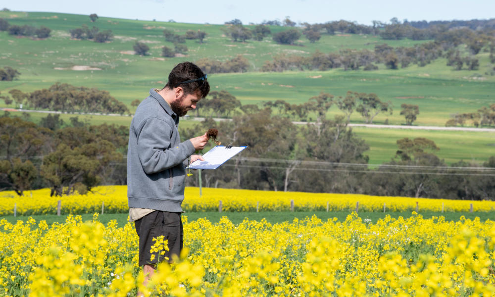 Wet season warning to monitor grains crops for pests and diseases